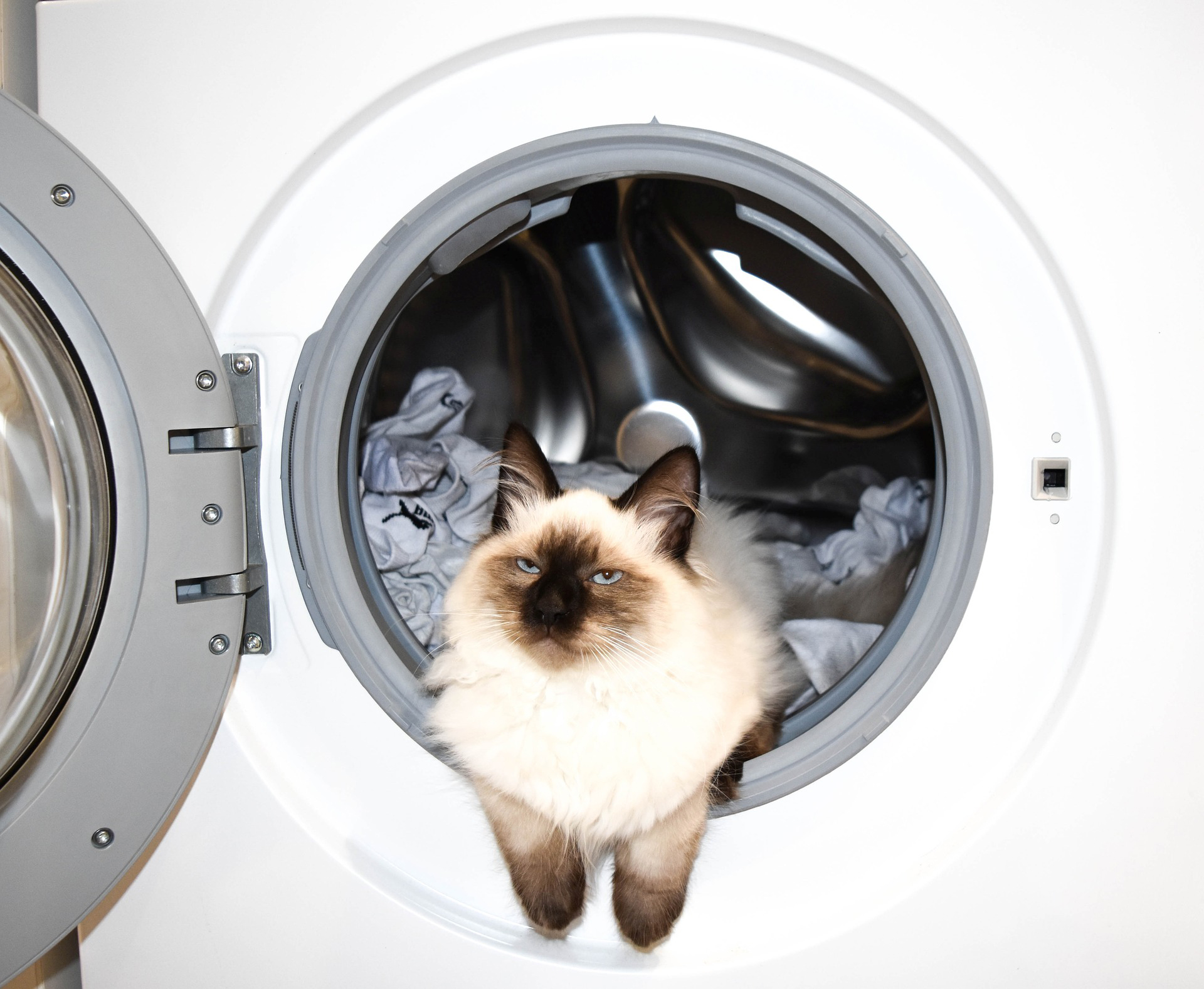 washing-machine-cat